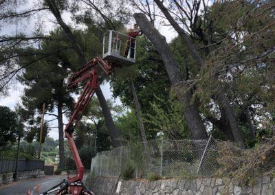 Abattage avec grue 50 mètres