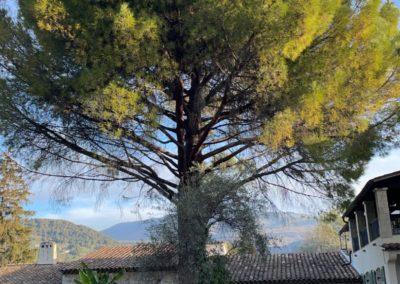 arbre avant