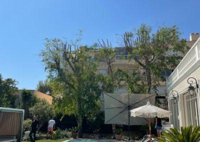 Elagage-arbres-Mougins-apres